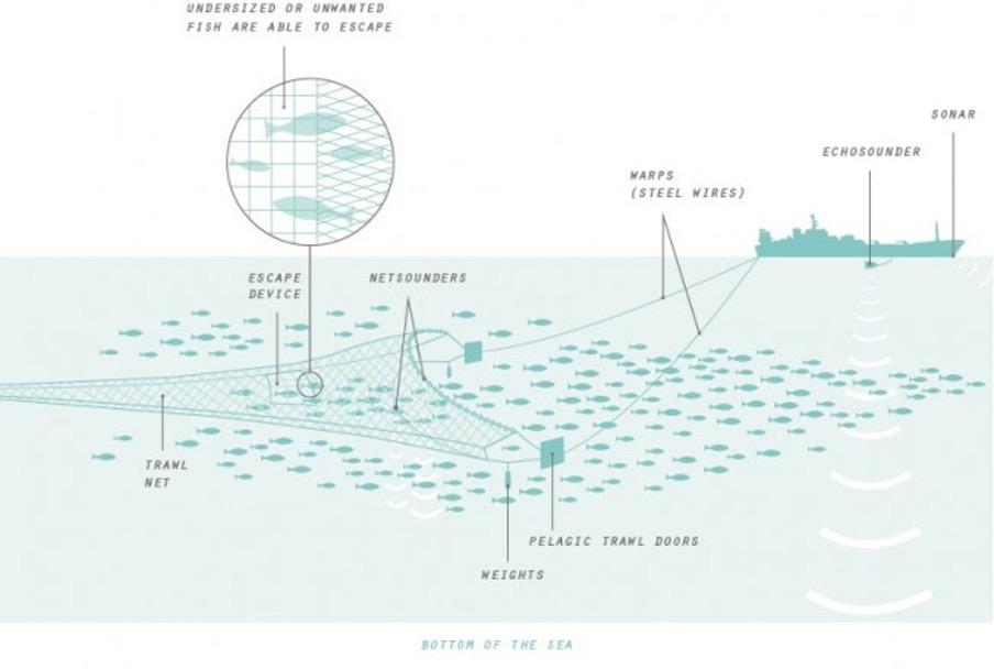Pelagic fishing infographic