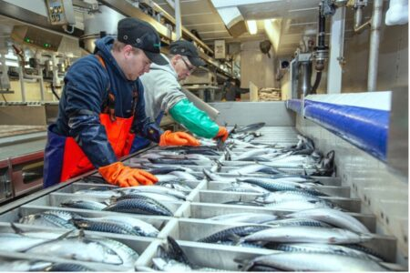 All of NAFCO's fish is sustainably caught, taste great and are inexpensive compared to most other proteins, representing excellent value for money.
